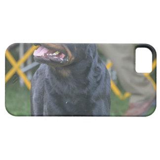 Rottweiler dulce iPhone 5 cárcasas