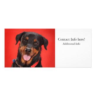 Rottweiler en rojo tarjeta publicitaria personalizada