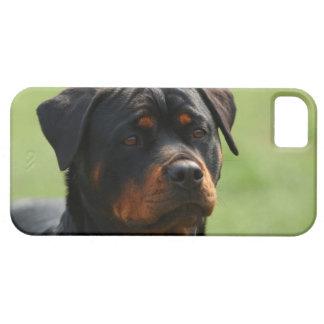 Rottweiler iPhone 5 Case-Mate Cárcasa