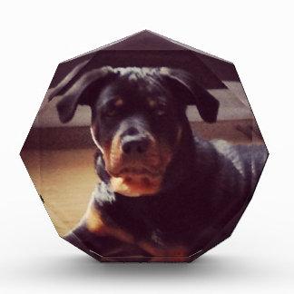 Rottweiler gifts acrylic award