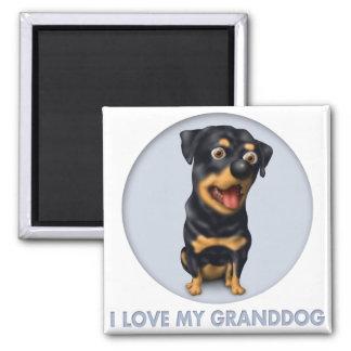 Rottweiler Granddog Imán