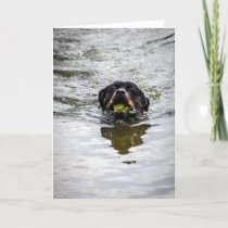 rottweiler in water card