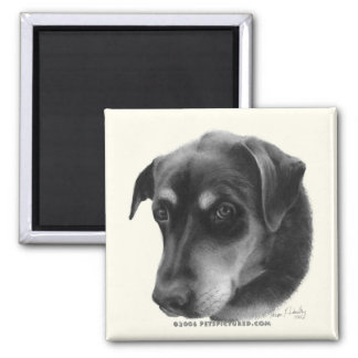 Rottweiler-Lab Mix 2 Inch Square Magnet