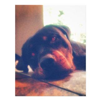 Rottweiler Memories Letterhead Template