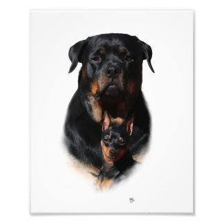 Rottweiler Miniature Pinscher Friends Photo Print