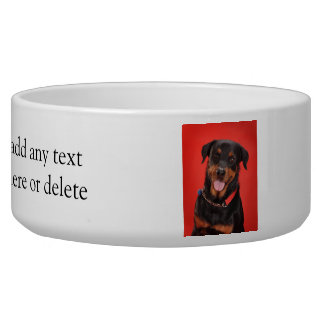 Rottweiler on Red Bowl