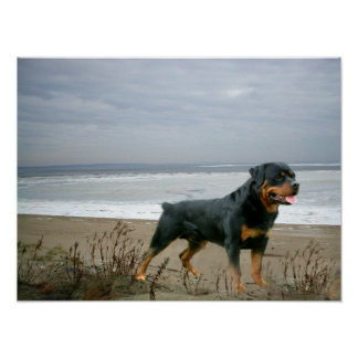 Rottweiler On The Beach Print
