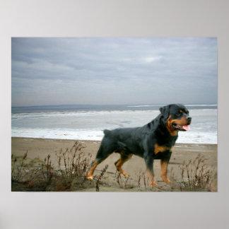 Rottweiler On The Beach Print