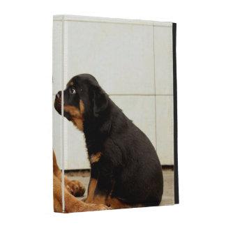 Rottweiler-perrito-perro-deseo vivo