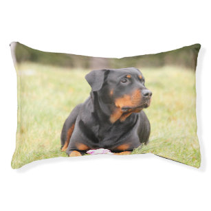 Rottweiler Dog Beds Zazzle