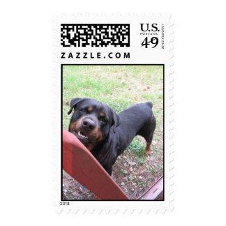 Rottweiler Photo Postage Stamp