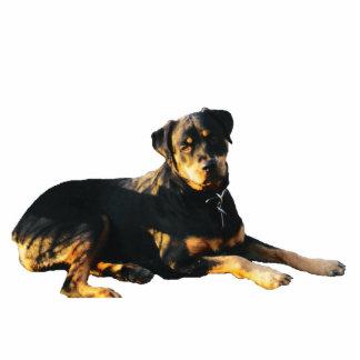 Rottweiler Photo Sculpture Magnet