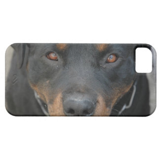 Rottweiler Picture iPhone 5 Case