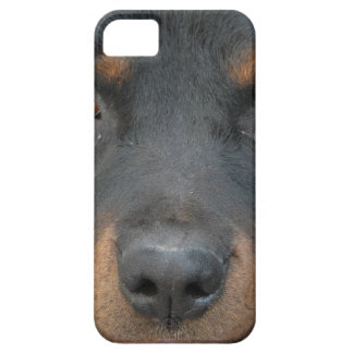 Rottweiler Picture iPhone 5 Covers