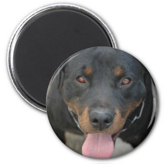 Rottweiler Picture Round Magnet
