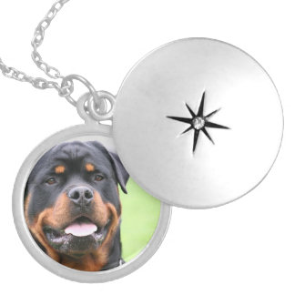 Rottweiler.png Silver Plated Necklace