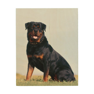 Rottweiler Portrait Wood Canvas