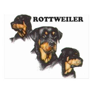 Rottweiler Post Cards