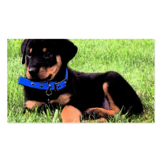 rottweiler pup Double-Sided standard business cards (Pack of 100)