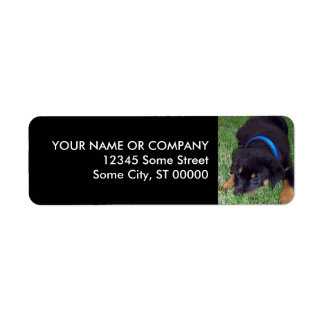 rottweiler pup. label