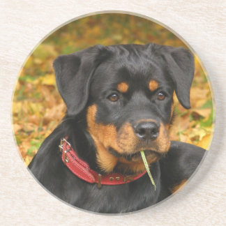 Rottweiler Pup Lying On The Ground In Forest Drink Coaster