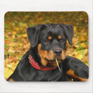 Rottweiler Pup Lying On The Ground In Forest Mouse Pads