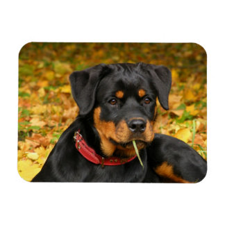 Rottweiler Pup Lying On The Ground In Forest Rectangular Photo Magnet