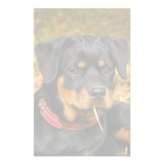 Rottweiler Pup Lying On The Ground In Forest Stationery