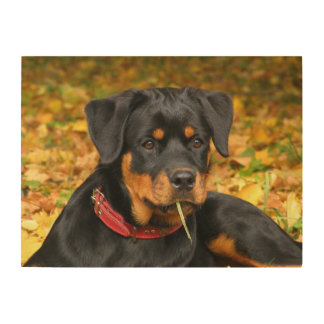 Rottweiler Pup Lying On The Ground In Forest Wood Print
