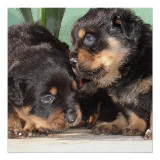 Rottweiler Puppies Best Friends Forever Poster