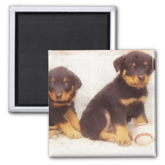 Rottweiler puppies 2 inch square magnet