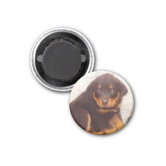 Rottweiler puppies 1 inch round magnet