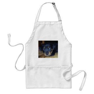 rottweiler puppy adult apron