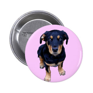 rottweiler puppy black tan dog eye contact pins