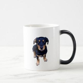 rottweiler puppy black tan dog eye contact coffee mugs