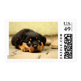 Rottweiler puppy dog curious about life stamp