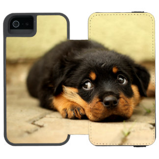 Rottweiler puppy dog curious wallet case for iPhone SE/5/5s