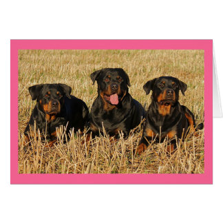 Rottweiler Puppy Dog Pink Blank Note Card