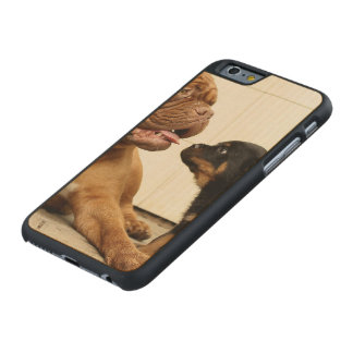 Rottweiler-puppy-dog-yearning Carved Maple iPhone 6 Case