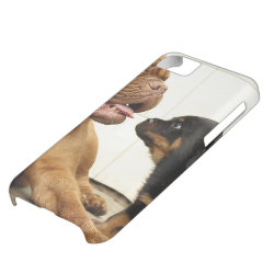 Rottweiler-puppy-dog-yearning Case For iPhone 5C