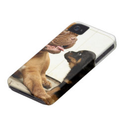 Rottweiler-puppy-dog-yearning Case-Mate iPhone 4 Case