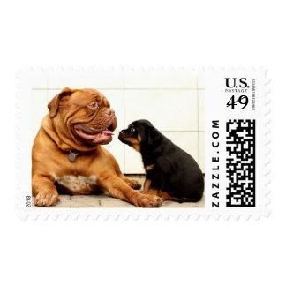 Rottweiler puppy dog yearning postage stamp