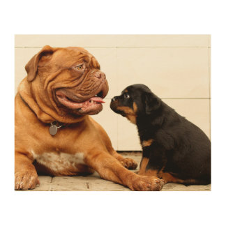 Rottweiler puppy dog yearning wood print