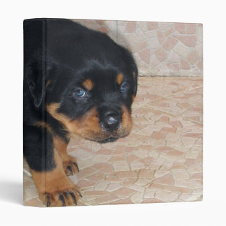 Rottweiler Puppy Looking Embarassed 3 Ring Binder