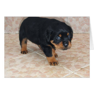 Rottweiler Puppy Looking Embarassed Greeting Card