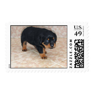 Rottweiler Puppy Looking Embarassed Stamp