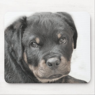 Rottweiler puppy mouse pad
