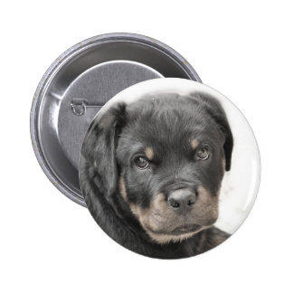 Rottweiler puppy pinback button