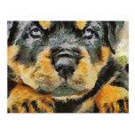 Rottweiler Puppy Portrait Postcard