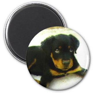 Rottweiler puppy round magnet
